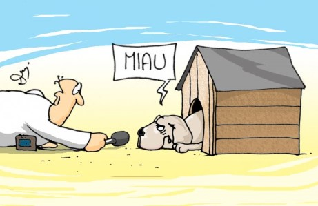 miau, hau, pies, buda, dziennikarz, prawda, kłamstwo